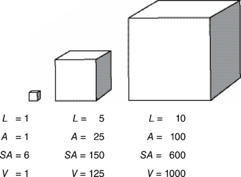 bar-graph-model-for-length-area-volume-draw-a-cube