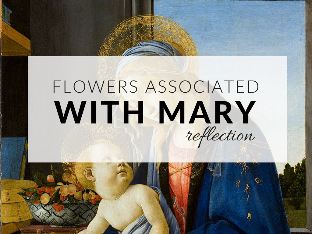 flowers-associated-with-mary-symbols-of-mary-mothers-reflection.png