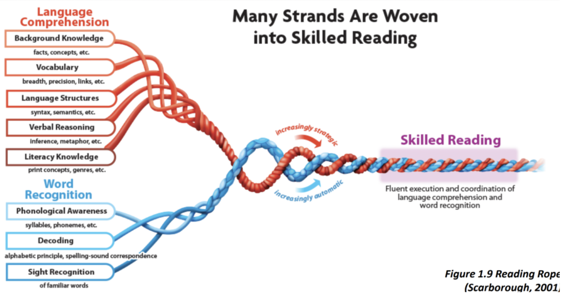 phonics-and-the-science-of-reading-scarborough-reading-rope